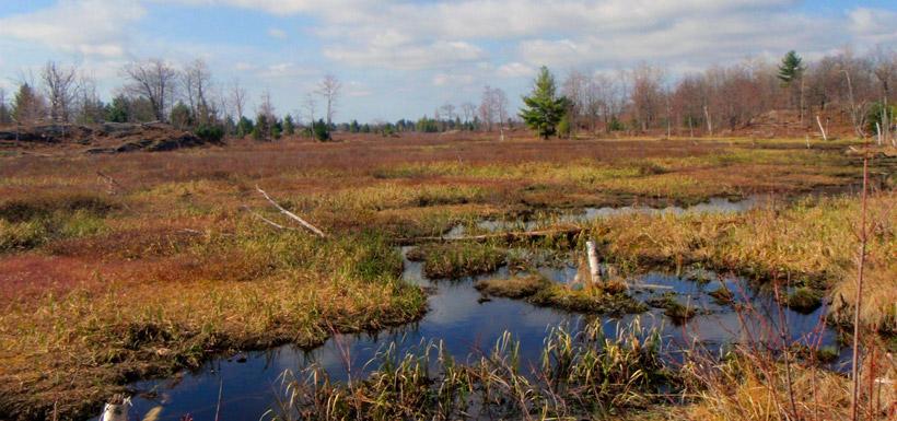 matchedash-wetlands-dave-ross
