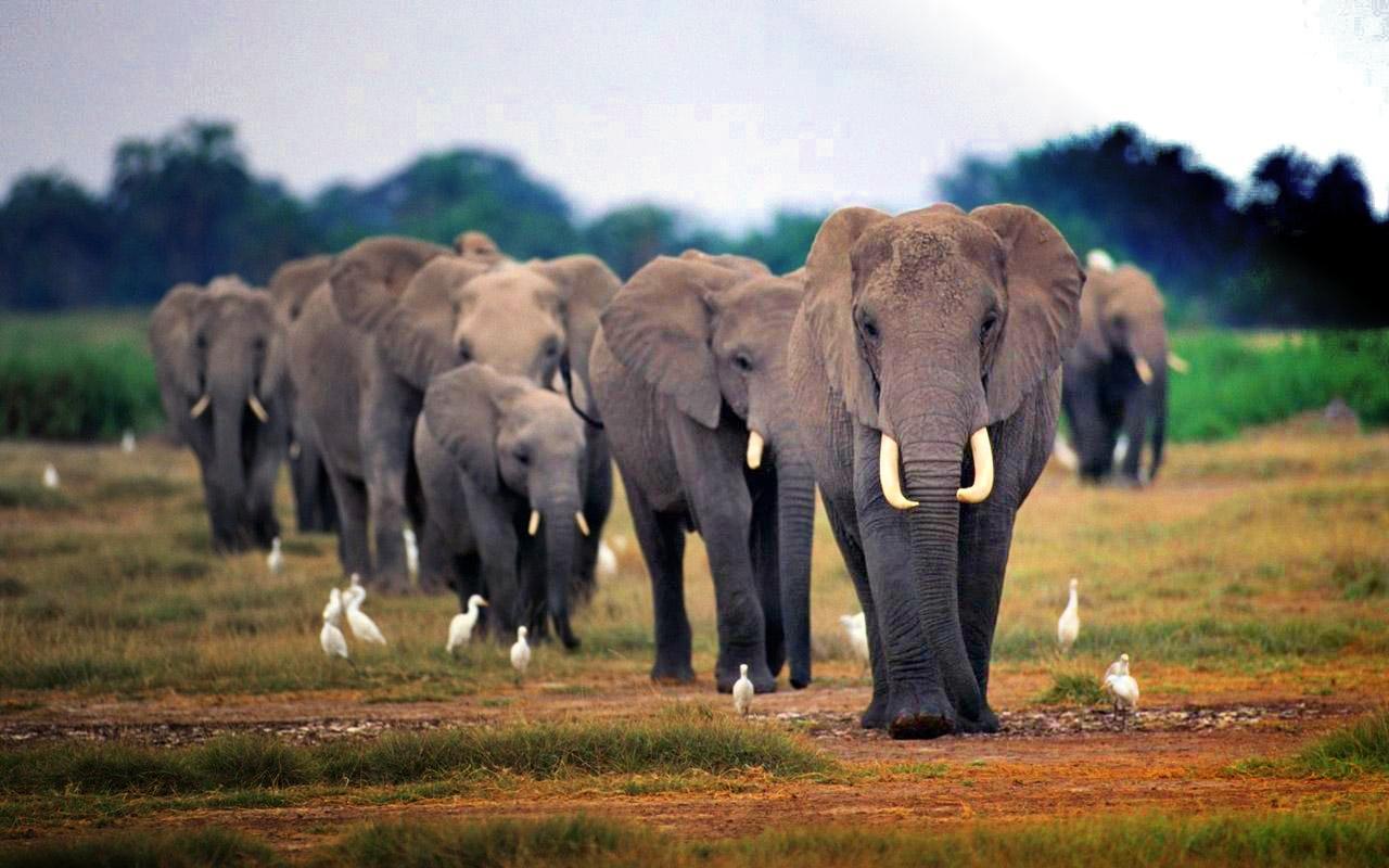 african-elephant-wallpaper-3